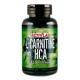 Activlab L-Carnitine + HCA